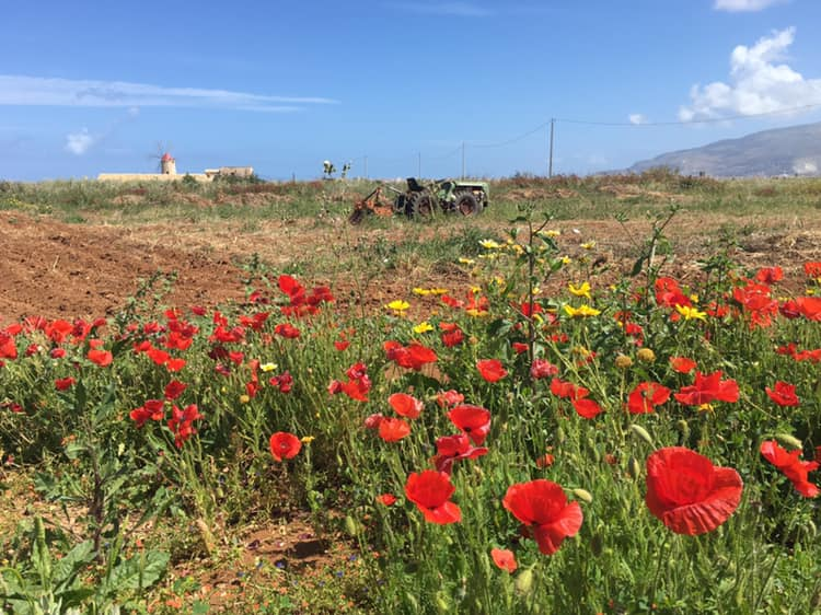 Lente in het mooie Sicilië - Danielle de Schipper